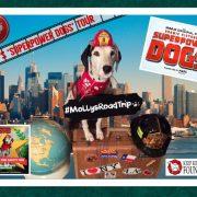 Suivez Molly, la chienne de sécurité incendie, dans sa tournée des Superpowers Dogs ! #MollysRoadTrip