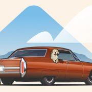 Voyage sur la route des chiens 101 : Protégez votre chiot